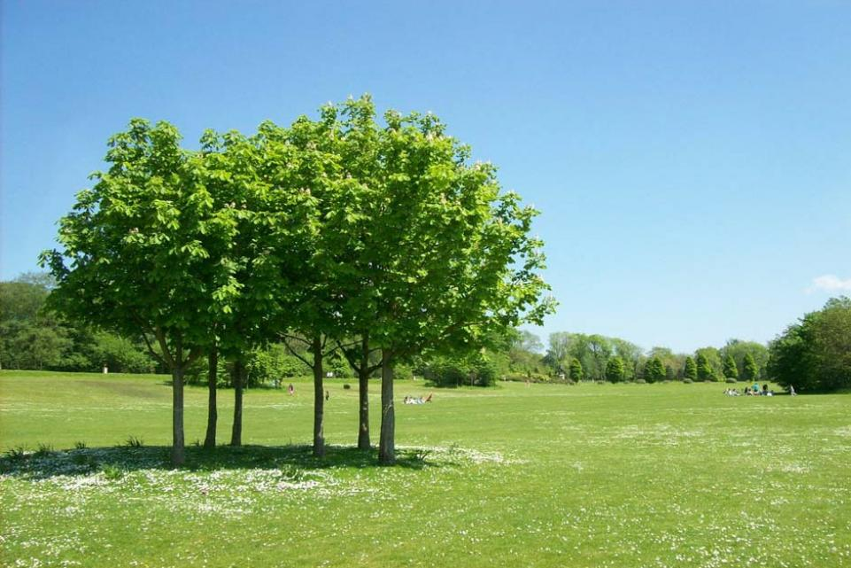 Green trees on a big green lawn on a sunny day